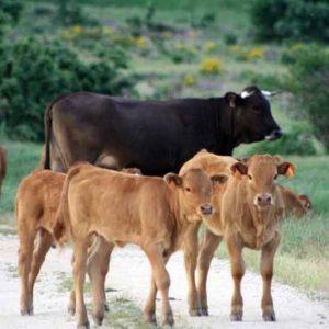vacas2home